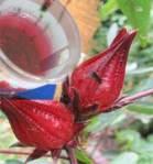 resep minuman rosella